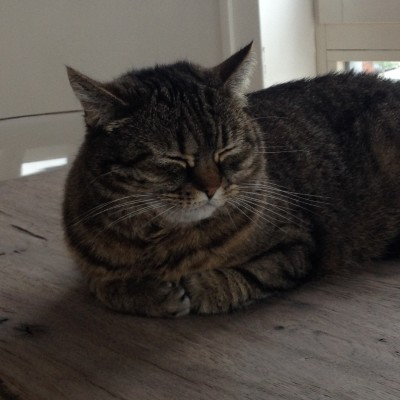 Waar ik thuis ook ben, daar is Puck ook. Zit ik achter mijn pc, dan ligt Puck op tafel. Als ik op de bank lig, is zij in de buurt. En als ik naar de slaapkamer ga, is ze daar heel snel bij. Zo lief! <3