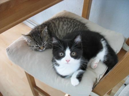 Mijn lieve babykatjes <3