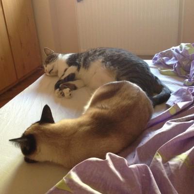 Even een tukkie doen. En natuurlijk drongen zijn lieve katjes zich aan me op.