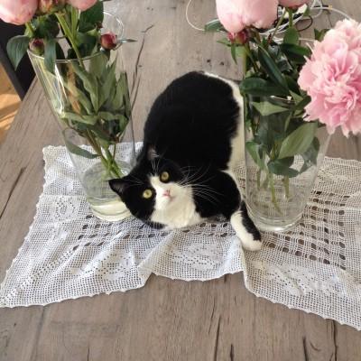 Zoë heeft s zondags heerlijk geslapen op het kleedje dat we van Marins moeder kregen.