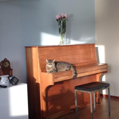 Puck is ook blij met de piano,