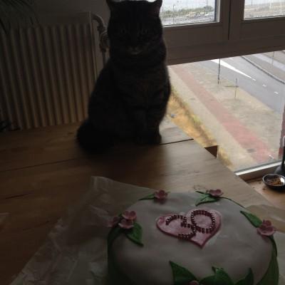 Ik besloot de taart toch nog een kans te geven. Puck vond het super interessant, die heeft de hele tijd op tafel gezeten en naar me gekeken.  (En nee, dat was niet vies, want ze kwam niet verder dan dat en zat er niet aan te ruiken of haar haren op uit te schudden)