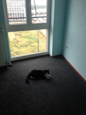 Zoë is geobsedeerd door de babykamer. Zodra de deur open staat, rent ze naar binnen en gaat ze languit op de grond liggen.