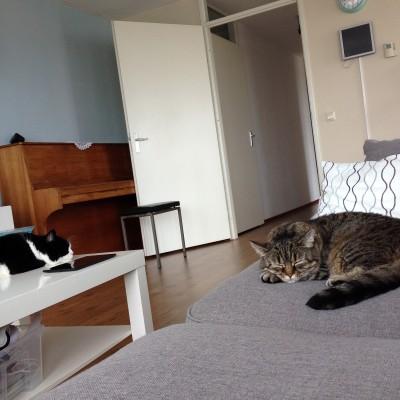 Zondag was het gelukkig aardig afgekoeld, maar na het huishouden, de was wegwerken en boodschappen doen moest ik toch echt even op de bank liggen. De katten straalden uit hoe ik me voelde.