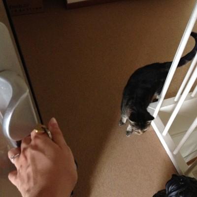 Maandagochtend: tijd op de katten van de buren eten te geven. Poes nummer 1 stond hongerig te wachten.