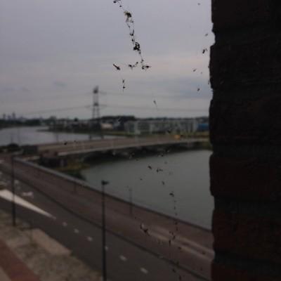 Vrijdag kwam de spinnenman langs. Dit smerige uitzicht is dus weer verleden tijd.