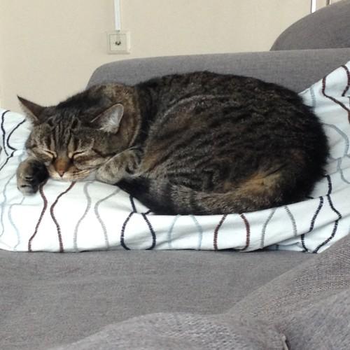 En maakte een foto van Puck, die zich op een kussentje had geïnstalleerd.