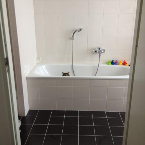 Afgelopen week wandelde ik nietsvermoedend de badkamer in toen ik opeens een hoofdje achter de badrand weg zag duiken. Toen ik even stil stond, kwamen er heel langzaam oortjes en oogjes tevoorschijn.