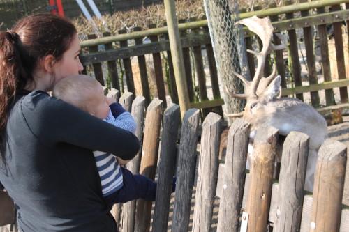 We keken ook even naar de hertjes. Nim wordt thuis erg blij van onze katten en ook de herten vond hij interessant.